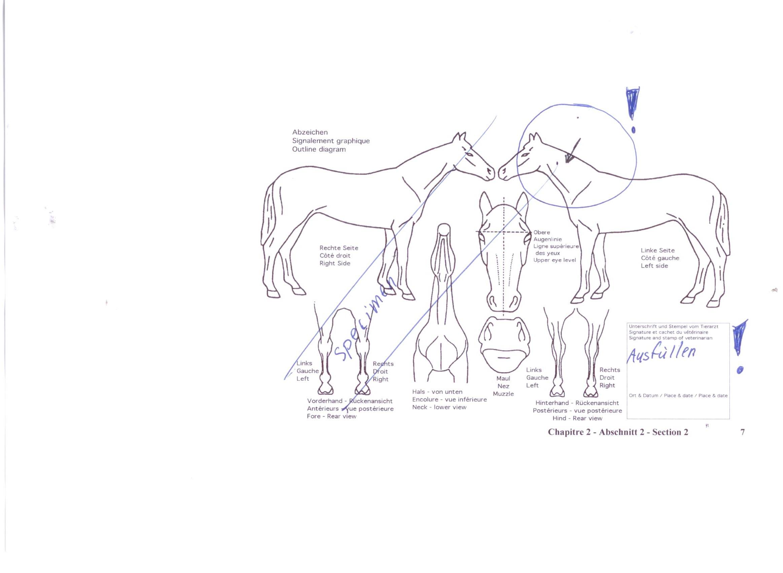 Tolle Anatomie Des Monocot Blatt Ideen - Menschliche Anatomie Bilder ...